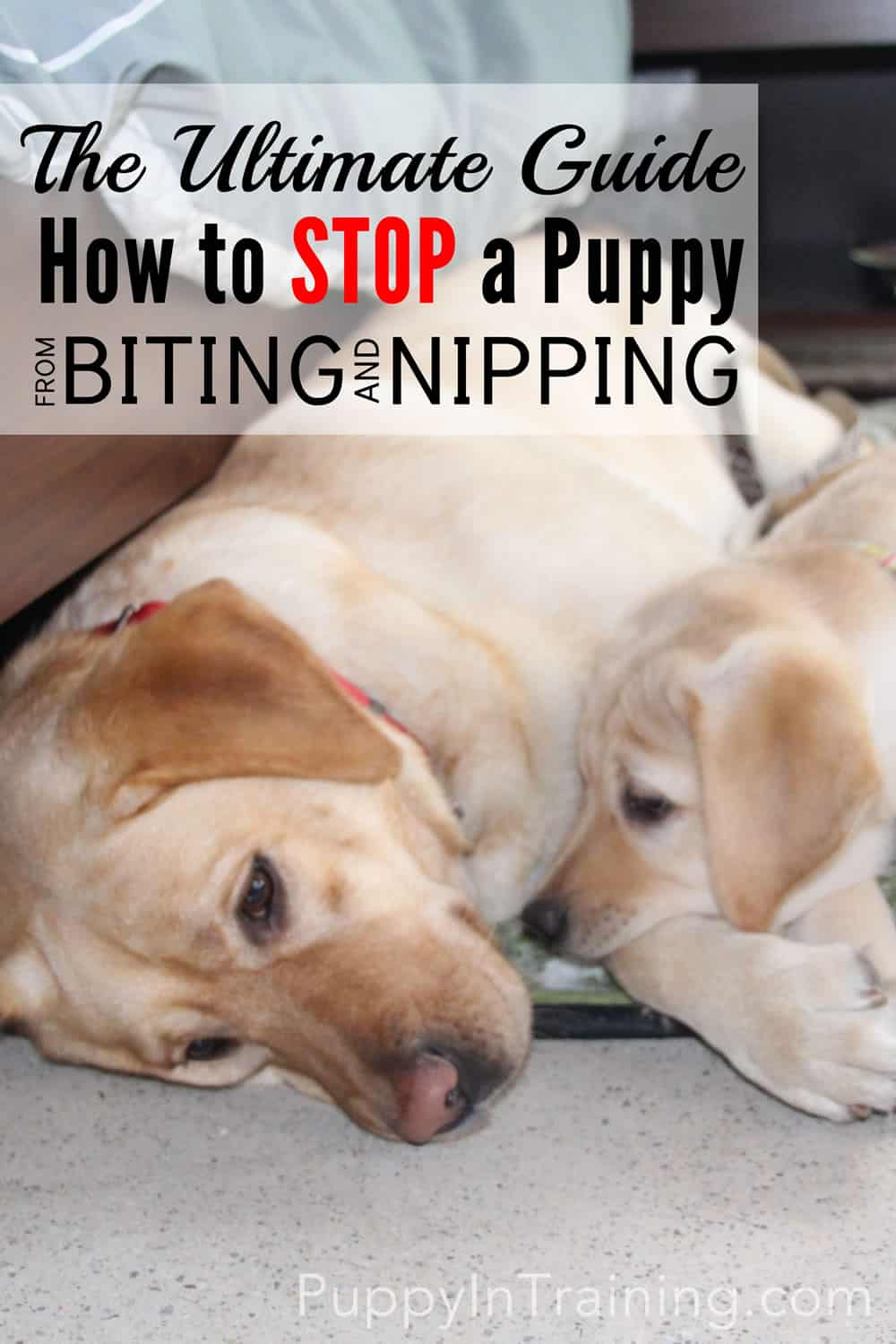 Train your puppy to stop biting