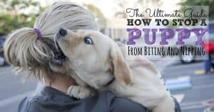 How to stop a puppy from biting and nipping