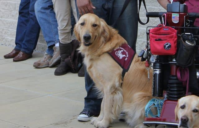 Apache CST Puppy