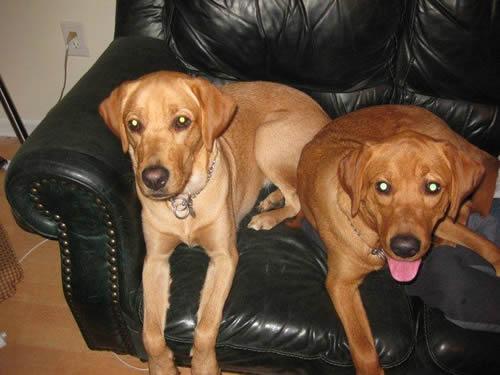 Guide Dog Story - Phyllis and Duke