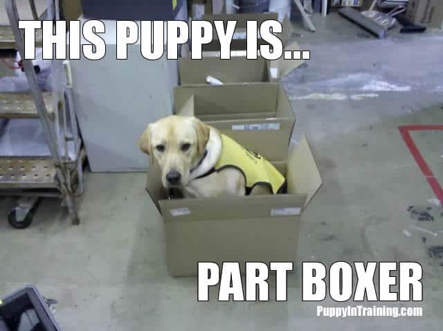 Part Boxer?