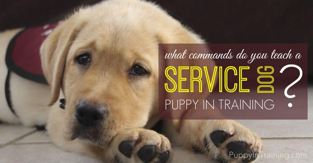 Service Dog Commands