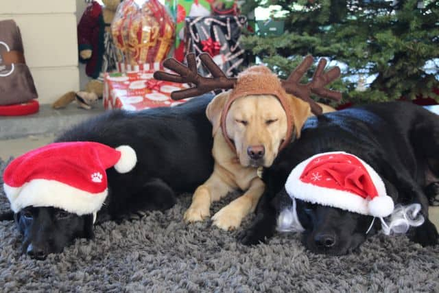Happy Holidays From The Doggies!