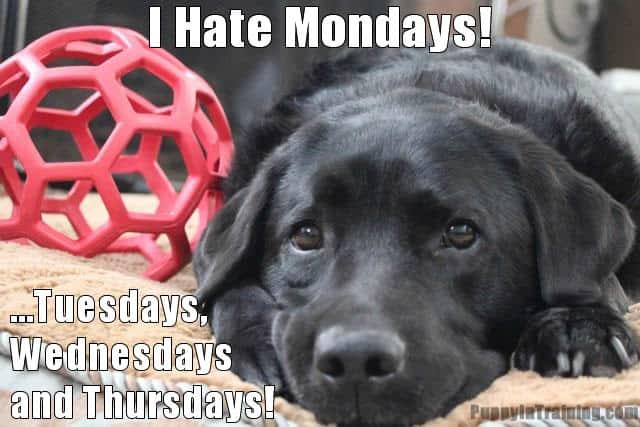 Stetson Hates Mondays!