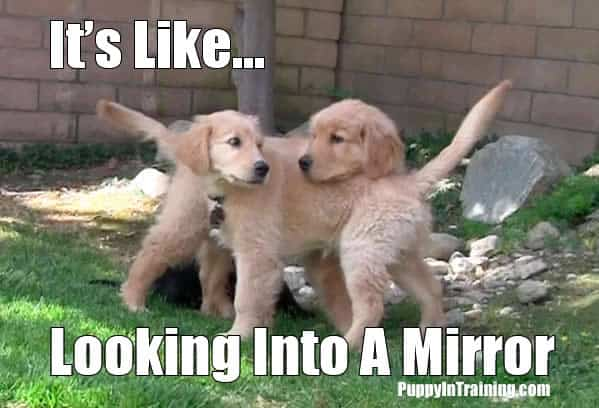 Puppy Reflection