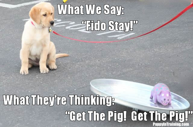 Puppy Thoughts