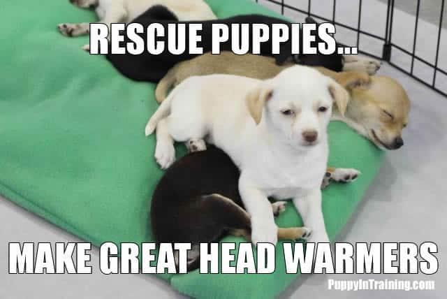 Puppy Head Warmer