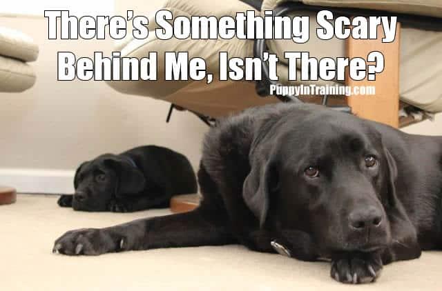 Puppy Scare!