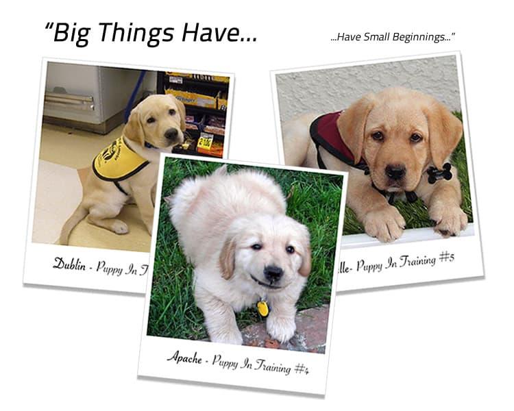 PuppyInTraining-Home