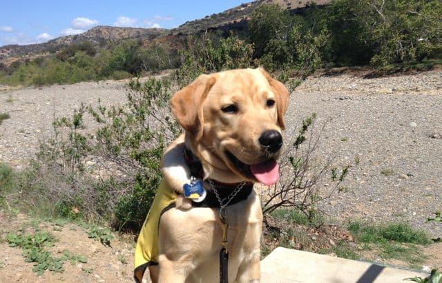 Puppy Tagg Desert Landscape