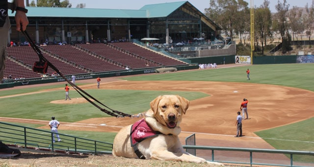 Take My Puppy Out To The Ball Game