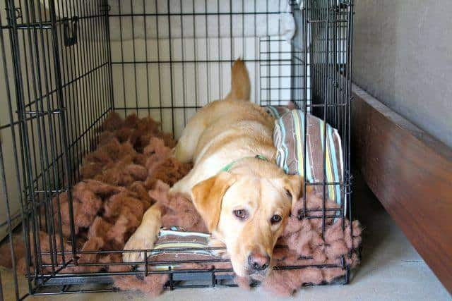 Adelle Destroys Dog Bed