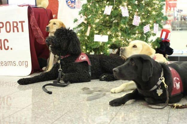 CST Puppy Training Outing