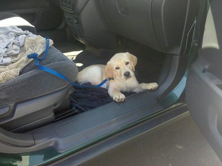 Dublin Dog Car
