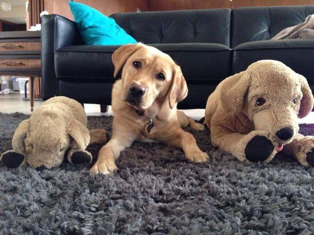 Puppy Clone Wars