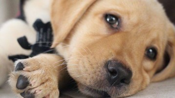 Puppy Adelle