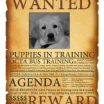 OCTA Bus Training for Pups