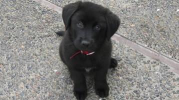 sponsor-a-puppy