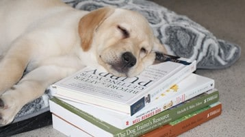 yellow-puppy-reading
