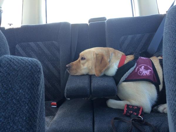Adelle Puppy car ride