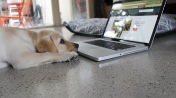 Puppy and His Laptop
