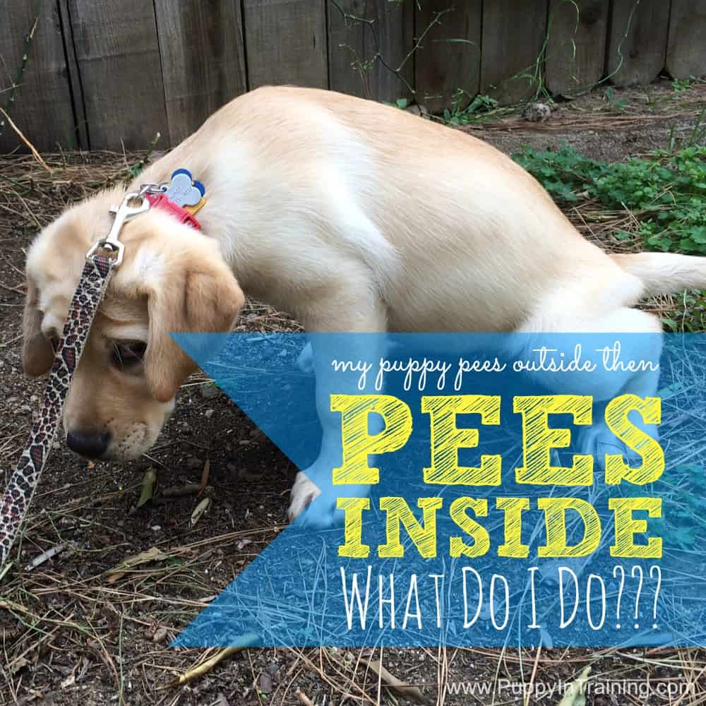 puppy pees outside then pees inside