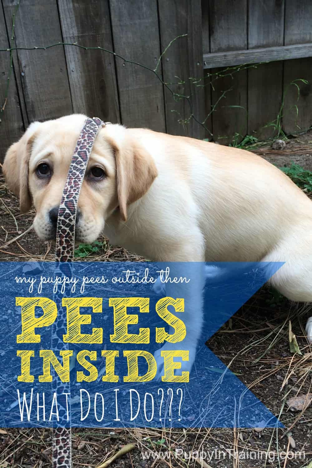 Puppy Pees Outside Then Inside