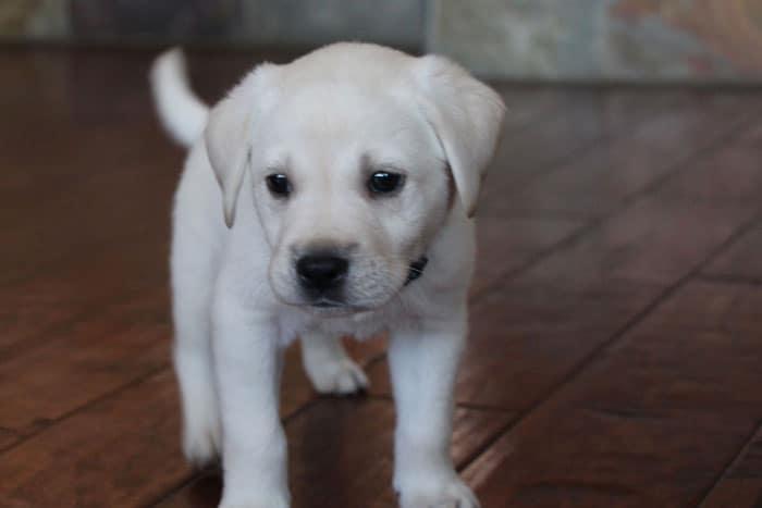 Camo-Green Puppy