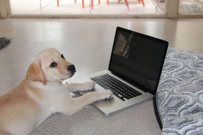 Puppy Blogging