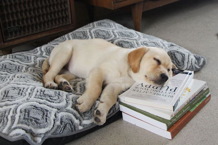 Puppy Training Through Osmosis