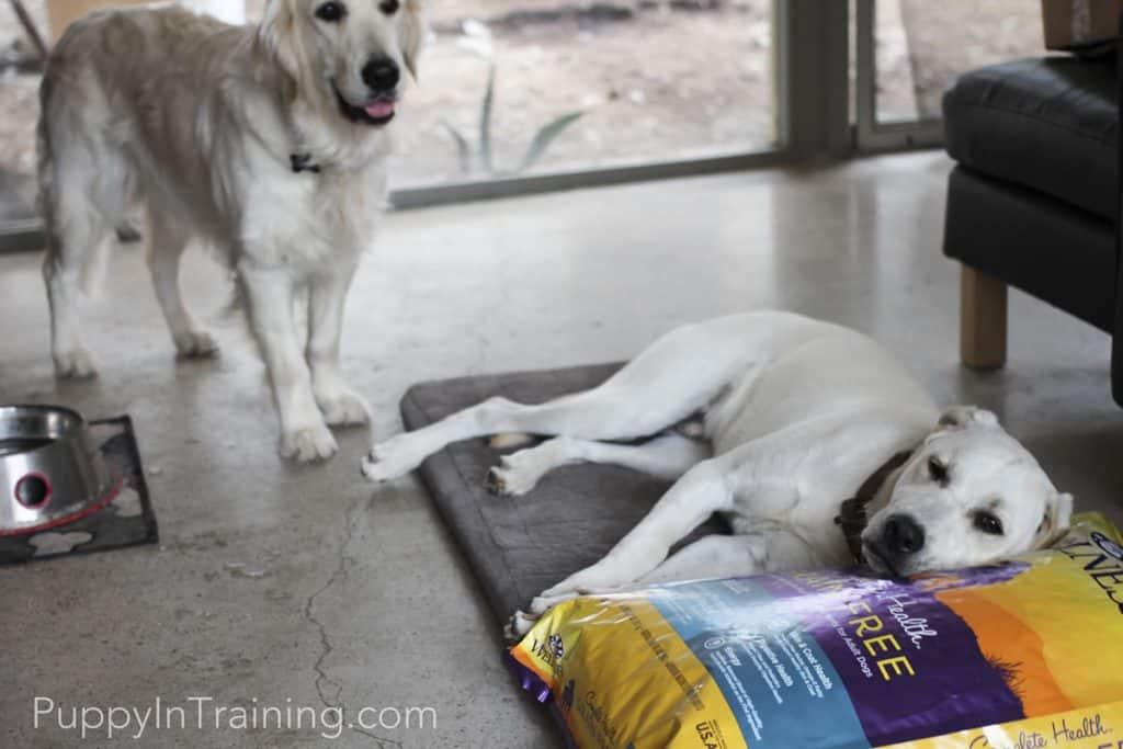 Wellness Dog Food Pillow
