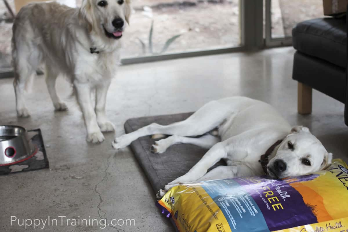 Top 3 Ways To Use Wellness Complete Health Grain Free Dog Food