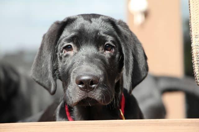 Puppy Pet Expo
