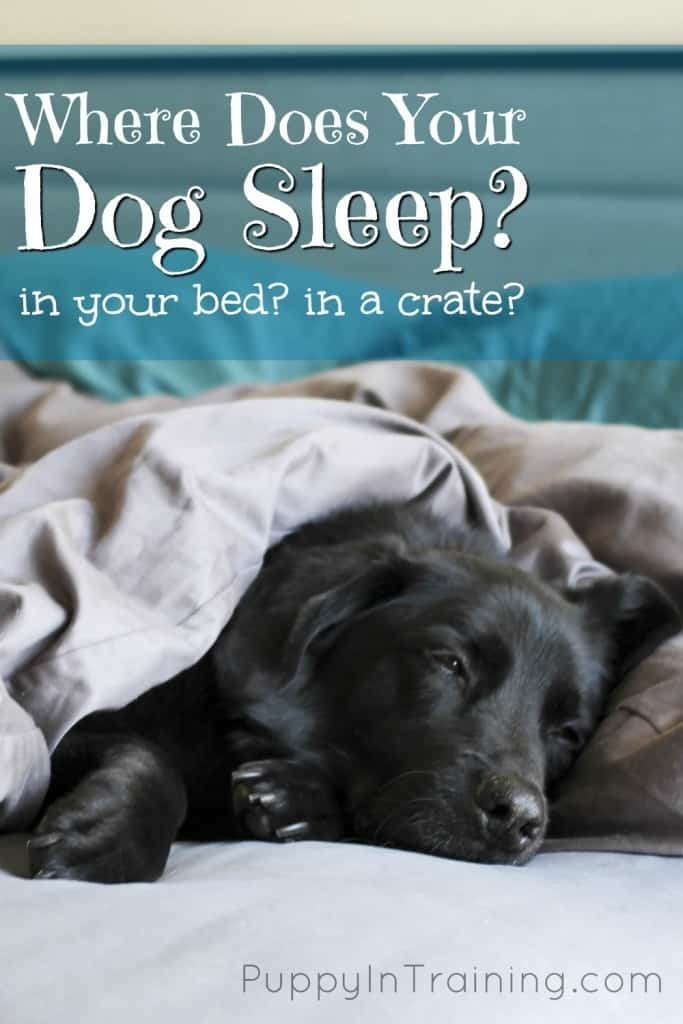 Where does your dog sleep at night?