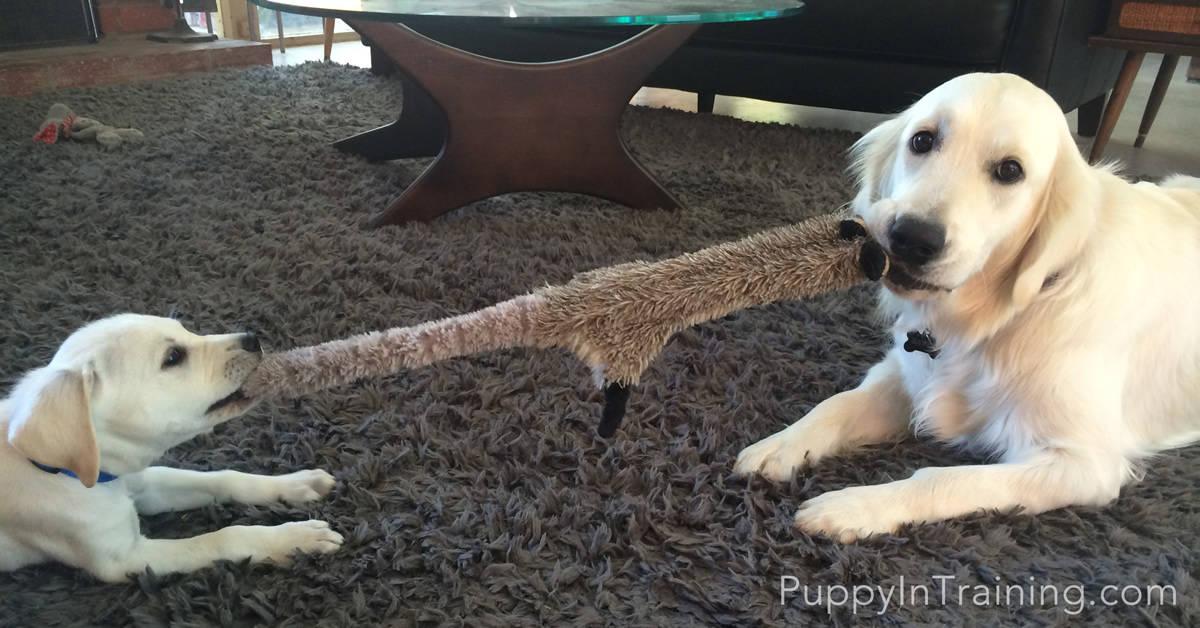 Dog vs Puppy