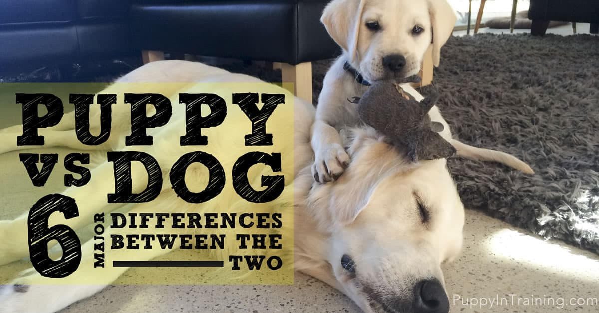 Puppy vs Dog: 6 Major Differences Between The Two