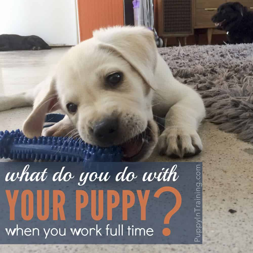 What Do You Do With Your Puppy When You Work Full Time?