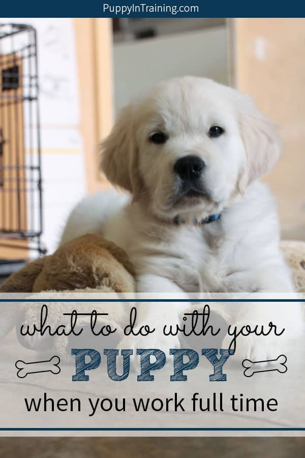 What do you do with your puppy when you work full time? We asked this question before we got Linus. It's difficult to work full time with a puppy. However, we have a few solutions for those who have to go to work all day, but still have a puppy. #puppyandworking #puppyandwork #puppyandworkingfulltime #workingandpuppytraining #workfulltimewithapuppy