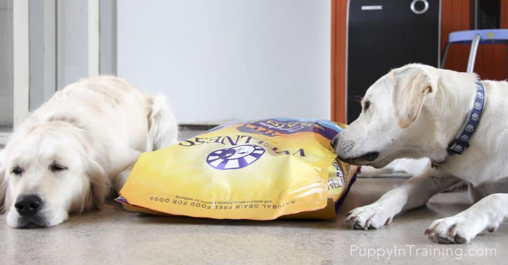 Sorry Raven...Archer gets the first bowl of Wellness Grain Free Dog Food!