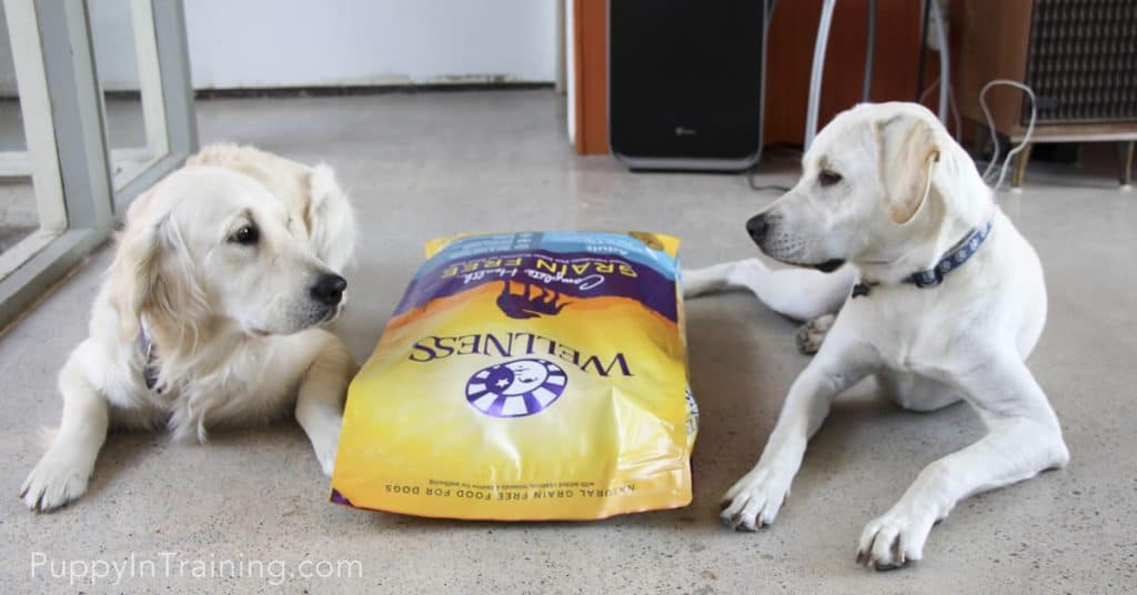 Raven & Archer: He/She who can stay awake longest gets the Wellness Complete Health Grain Free Dog Food!