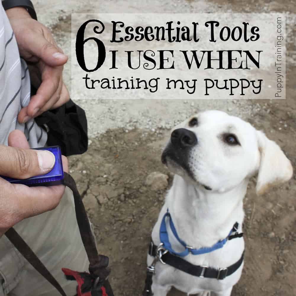 Tools I Use When Training My Pupppy