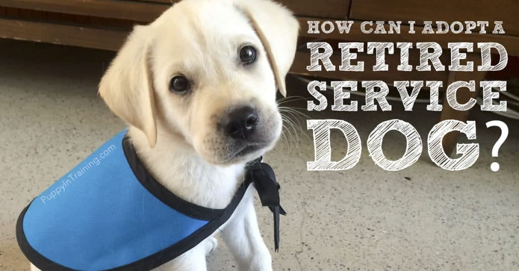 How to adopt a retired service dog
