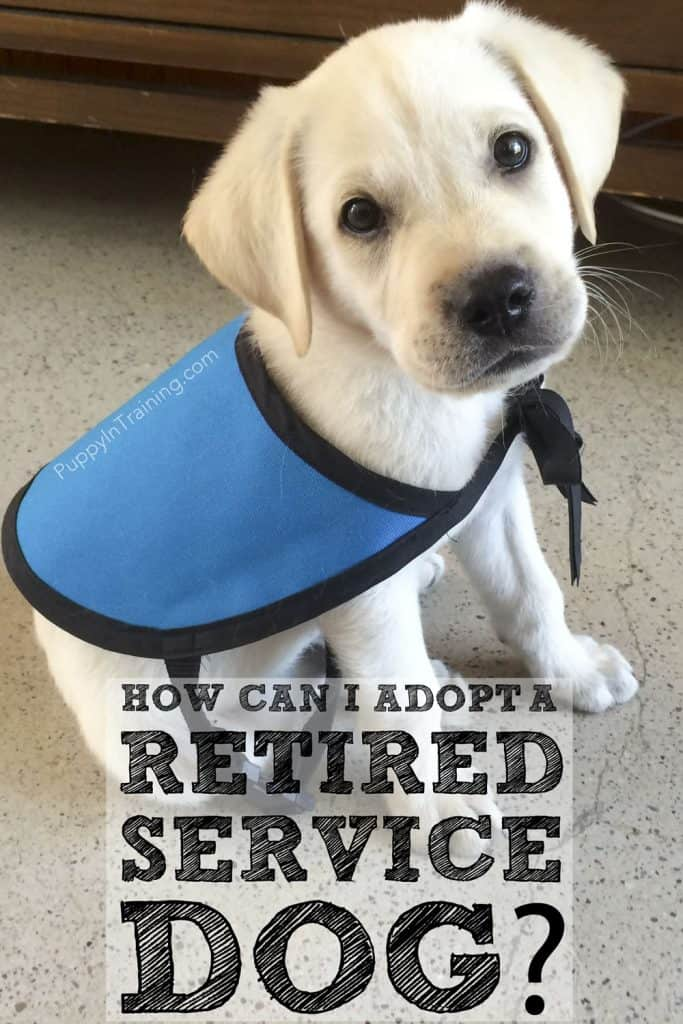 How can I adopt a retired service dog?