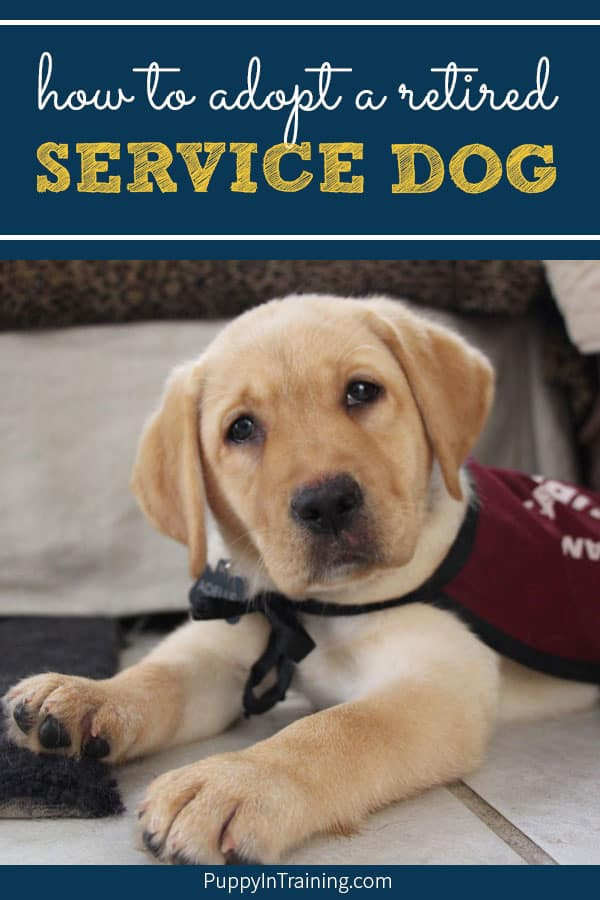 Adopt A Retired Service Dog Or Failed
