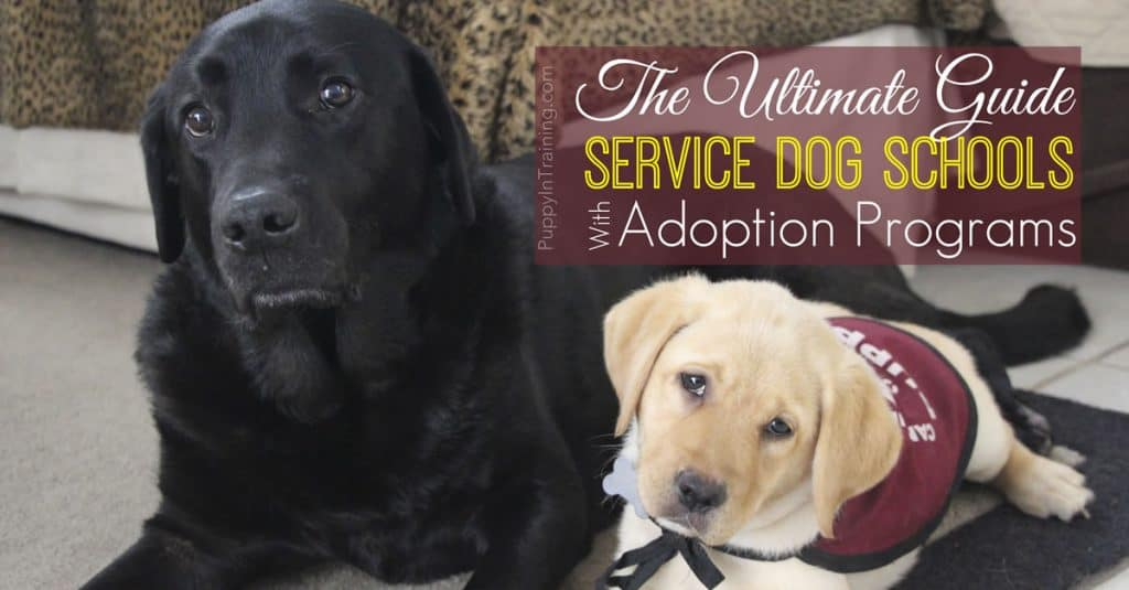 The Ultimate List: Service Dog Schools with Adoption Programs