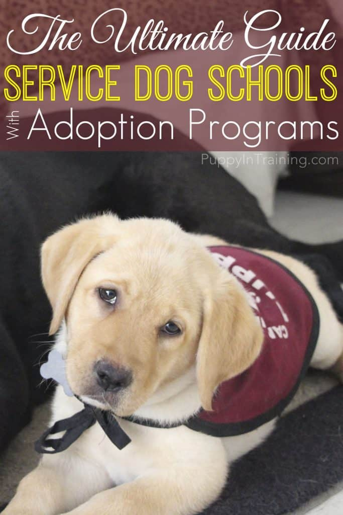The Ultimate Guide: Service Dog Schools with Adoption Programs