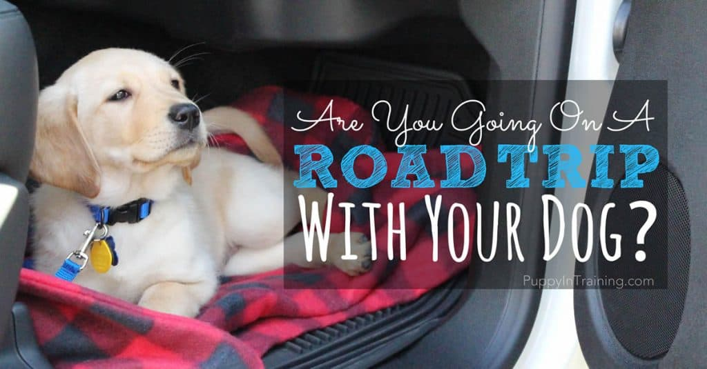 Are you going on a road trip with your dog?