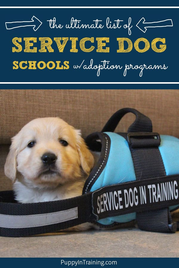 Are you interested in adopting a career changed service dog? Many people don't know that not all service dog puppies in training become working dogs. Puppies that don't make it as service dogs are called career changed and are often adopted to loving families. We compiled a list of service dog schools with adoption programs to help people find adoptable service dogs. #servicedogadoption #guidedogadoption #assistancedogadoption #servicedogschools #careerchangedog #adoptapuppy #puppyadoption