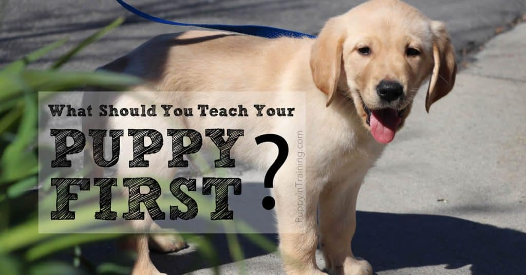 What should you teach your puppy first?