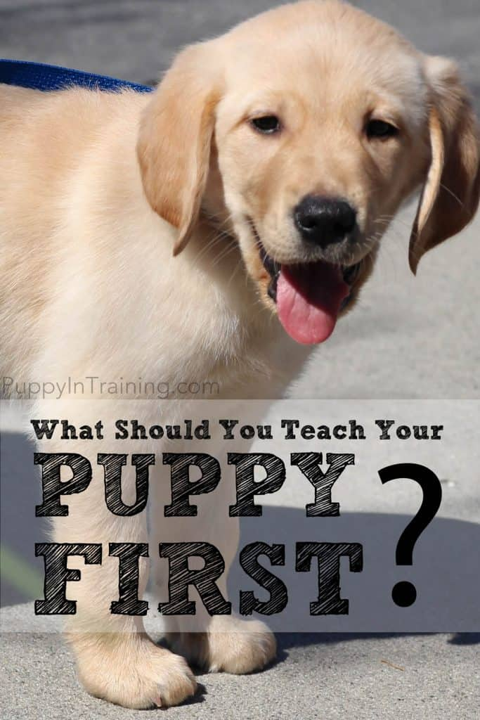 what should i teach my puppy first?